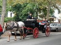02 Horse and Carriage Taxi