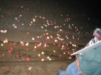 Rose petals on the ground by the protest.