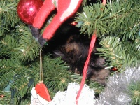 There's a cat, perched in the fake Christmas tree.  She really likes it in there.