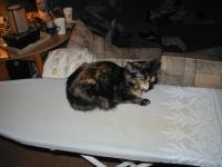 Tatiana, on the ironing board.